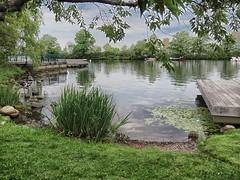 (mahler9) Tags: esplanade boston park green lagoon reflection tree august 2015 mahler9 jaym