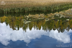 riflessi, reflections (paolo.gislimberti) Tags: paesaggi landscapes waterscapes acqueferme stillwaters lake lago reflections riflessi prateriaalpina alpinegrassland alberi trees conifers conifere autumn autunno autumnalcolors coloriautunnali nuvole cielonuvoloso cloudysky clouds