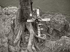 In Memory Of (jorgeecrespo) Tags: bw blackandwhite cross landscape tree inmemoryof