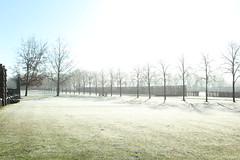 Le parc (mamalaas) Tags: nature parc grass herbe verte neige snow treearbre paysage france