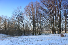IMG_3117 (wozischra) Tags: berlin heiligensee spaziergang baumberge höchster baum altheiligensee