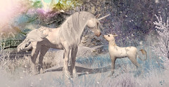 """Contest Entry"" My little one (meriluu17) Tags: unicorn white winter snow snowflake foal little baby horse pet animal outdoor sweet magic magical fantasy surreal aurora shine frost frozen horn mother kid mane"