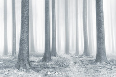 El bosque etéreo (Mimadeo) Tags: forest fog tree trees trunk light landscape foggy mist misty morning wet mystery mysterious mood nature park wood beautiful idyllic bright black white blackandwhite highkey ethereal path monochrome fantasy winter cold