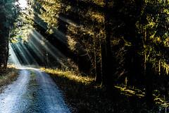 The Way of Secrets - Explore # 101 (*Capture the Moment*) Tags: 2016 forest leicalenses leicasummiluxm1475 leitzsummiluxm1475 licht lichtstrahlen light lightbeam rayoflight sonnenstrahlen sonya7m2 sonya7mii sonya7mark2 sonya7ii sonyilce7m2 wald winter