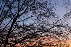 Bare branches against the sunset (zinnia2012) Tags: sunset barebranches zinnia2012 coucherdesoleil arbre branches fol