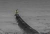 IMG_2669.jpg (IanHTomlinson) Tags: porthleven cornwall surfer sea