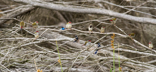 Finches and Wrens