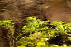 7K8A2360 (rpealit) Tags: scenery wildlife nature east hatchery alumni field hackettstown