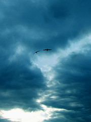 come fly with me (tamjpn) Tags: blue sunset sky cloud bird topv111 100v10f