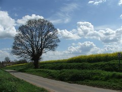 Country road (vvt) Tags: road blue deleteme5 deleteme8 sky white deleteme deleteme2 tree deleteme3 deleteme4 deleteme6 deleteme9 deleteme7 field yellow cloud