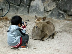 The innovative zoom lens... (chishikilauren) Tags: topf25 topv111 japan deer miyajima juniorphotographer innovativecameraequipment