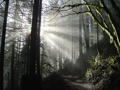 Sunlight in the Trees (Mark Griffith) Tags: sunlight wow outdoors washington moss interestingness hiking steve aaron 100v10f ridge rattlesnake rattlesnakeledge mbgphotoframe