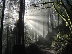 Sunlight in the Trees (Mark Griffith) Tags: sunlight wow outdoors washington moss interestingness hiking steve aaron 100v10f ridge rattlesnake rattlesnakeledge mbgphotoframe