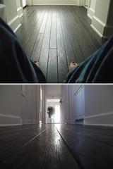 (emdot) Tags: diptych toes twinkle utatasolitude woodfloors fromthefloor