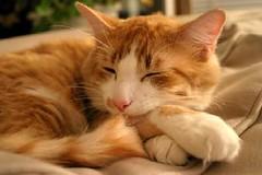 Gato por lucianamisura