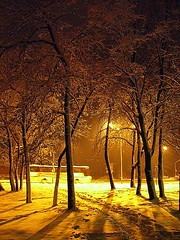 sn2031 (Zoran Skaljac) Tags: trees winter snow yellow night europe serbia novisad zoran kaljac skaljac srbija futokiput thebestyellow