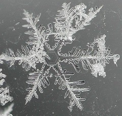 Snow Crystal #1 (Kevin In Canada) Tags: snowflake winter snow ice window crystal 10 flake theme icecrystal photojunkie