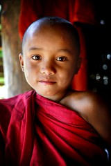novice portrait - myanmar monk buddhist child boy religion bagan phitar portrait novice