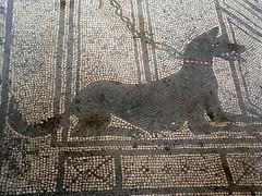 Mosaic of a Watch dog (mharrsch) Tags: italy volcano ancient roman resort tragedy disaster pompeii naples vesuvius romanempire eruption mharrsch