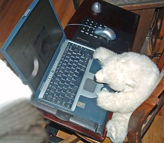 blogging bear