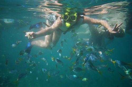 buceando entre peces en Palau