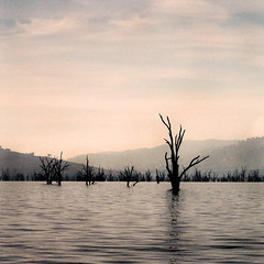 Ends of the world (eyecatcher) Tags: nature lake hume wodonga water landscape world imagine tree