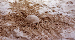 (Charissa May Borroff) Tags: beach skull scotland sand seashore sandsculpture interestingness31 i500 5april2005