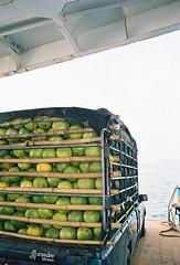 Jackfruit delivery (tarotastic) Tags: thailand koh chang kohchang jackfruit pomelo truck