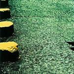 yellow stumps