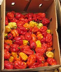 chilis (estherase) Tags: uk red orange london yellow findleastinteresting market box cardboard canonixus400 chilis 0f emssimp 250311