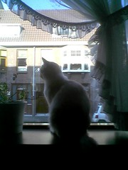 Bennieraam (PJ Mirella) Tags: windows cats bennie catsandwindows