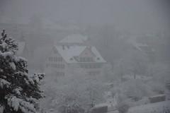 neighbours in the snow (Dreamer7112) Tags: snow 20d schweiz switzerland europe suisse suiza canon20d zurich canoneos20d snowing zrich svizzera zuerich winterwonderland eos20d zurigo limmatwest latemarchsnow