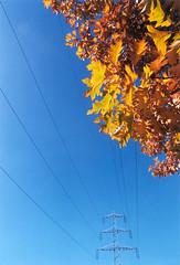 STROM (joojanta) Tags: autumn fall film colorful power angle wide wideangle olympus line uncropped ultrawide vivitar scannedprint 19mm ultrawideangle om4ti colornegativefilm joojanta nonzuiko