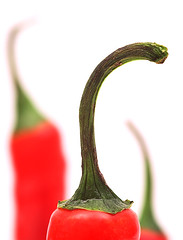 Hot! hot! hot! (Rune T) Tags: red hot macro green topf25 wow three chili dof