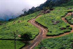 Ooty (Atri Kundu) Tags: travel nature expression ooty greenscene