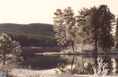 Jmtland - Stugun (Per Ola Wiberg ~ Powi) Tags: winter nature reflections sweden gorgeous frosty 1993 harmony sverige stillness shiningstar jmtland globalvillage musictomyeyes naturescenes naturegroup friendsforever redgroup northof60 finegold minolta7000 topphotoblog stugun natureplus mywinners abigfave diamondheart peaceaward flickrbronzeaward crystalawards flickrsilveraward diamondstars eperke bluespointofview arealgem highqualityimage beautifulshot fotosconestilo naturestreasures doubledragonawards photographerparadise ablackrose exquistecapture fabulousplanet flickrsgottalent zodiacawards fireworksofphotos aboutthenaturewithlove chariotsofartists hellofriend naturespoetry~~ soulocreativity