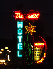 Daffodil Motel (Curtis Gregory Perry) Tags: new old blue light red signs flower classic luz glass crimson sign azul night vintage hotel licht march rojo neon glow northwest bright lumire lodging tube tubes cyan free motel 2006 ne retro special daffodil signage movies glowing always blau dying vacancy luce muestra redblue important accomodation signe sinal federalway neons accomodations  zeichen non segno   releases   teken    roht  glowed    neonic