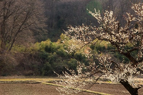 Spring from Japan 1