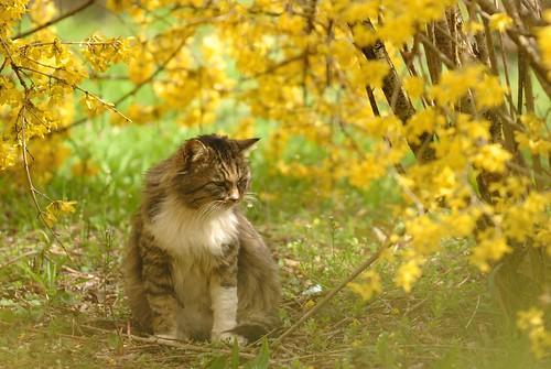 CAT'S LIFE #1