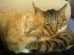 Sweet (jacky elin) Tags: cats cat mix sweet tabby 2006 lin jacky 貓