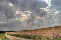3outof1 (Andreas Reinhold) Tags: sky sun nature field sunshine clouds germany 350d corn natur rays rebelxt sunrays bergischesland hdr korn sonnenschein mettmann strahlen