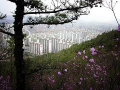 Oops! A City! (짜디그노스 (Zadignose)) Tags: city flowers deleteme5 deleteme8 mountain deleteme deleteme2 deleteme3 deleteme4 deleteme6 deleteme9 deleteme7 smog saveme2 saveme3 deleteme10 korea valley mountainview uijeongbu saveme1