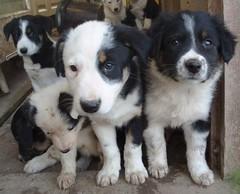 Mucky pups - by northdevonfarmer
