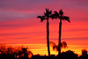 The sunset I almost missed (gwilmore) Tags: sunset arizona d50 albaluminis interestingness481 i500 explore13april2006 fcsetsrises