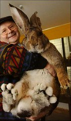 bunny (owlana) Tags: cute rabbit bunny fur fluffy want mutant chubster