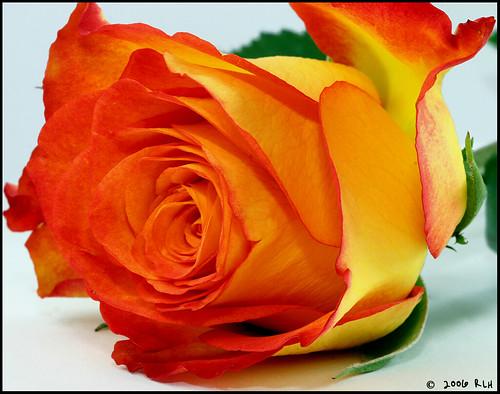 volim narančasto 130247924_02a68a8e34