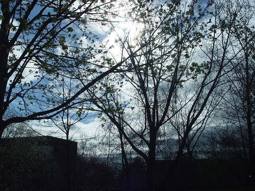 dark trees, blue sky