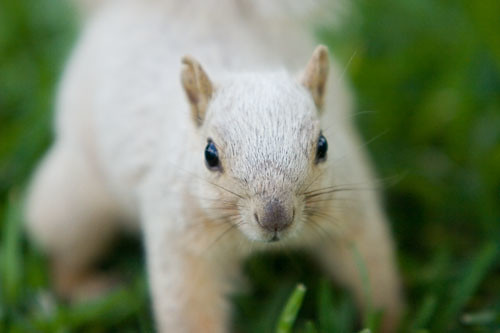 Eddie the Albino Squirrel