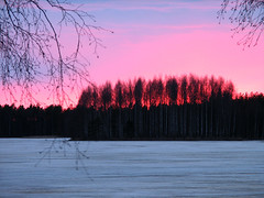 Trees in fire (Vaeltaja) Tags: blue trees light red sky snow nature suomi finland landscapes spring lumi sceneries luonto valo sininen punainen kevt puut taivas maisemat paloniemi