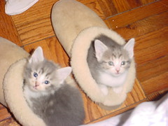 My Sister's Kittens (trouble monkey) Tags: cats kittens